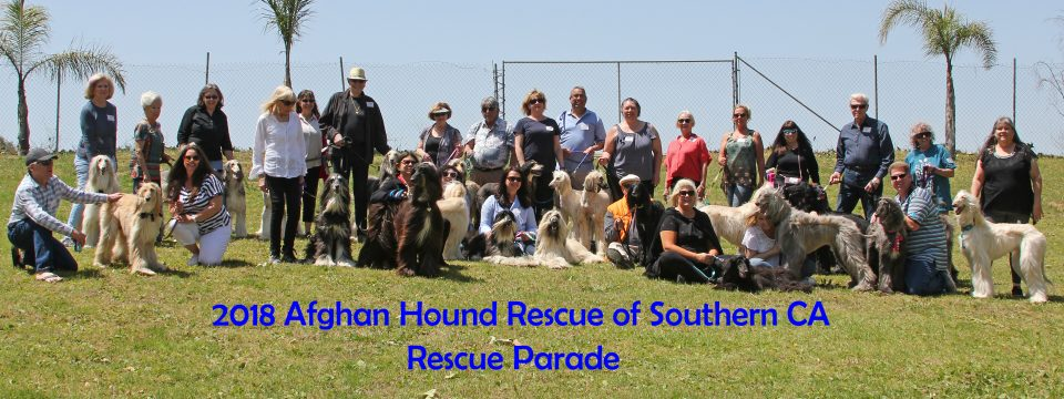 Home Page 2018 Group Rescue Parade