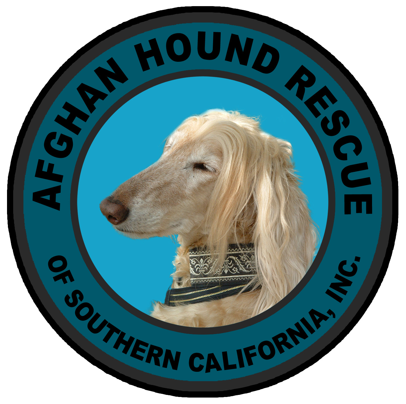 Welcome to Afghan Hound Rescue of Southern California